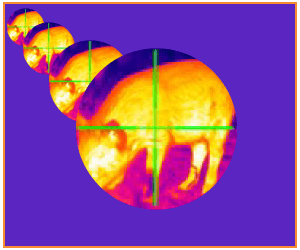 Thermal Scope: Magnification