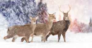 Pros and Cons of Deer Hunting in Cold and Warm Rainy Weather