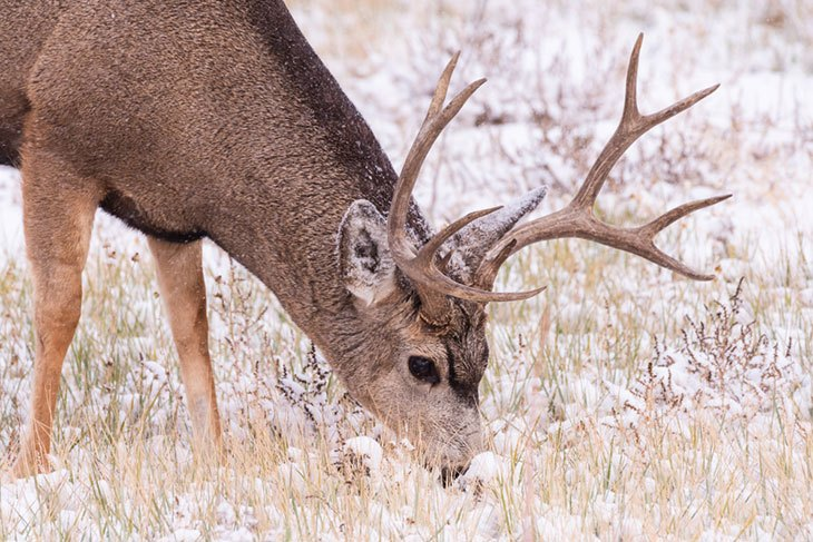 colorado hunting seasons 2019