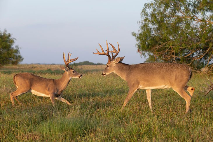 texas hunting seasons and bag limits